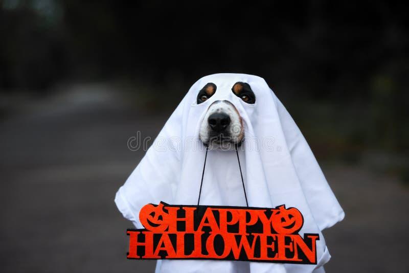 Perro de Entlebucher que presenta para Halloween fotos de archivo libres de regalías