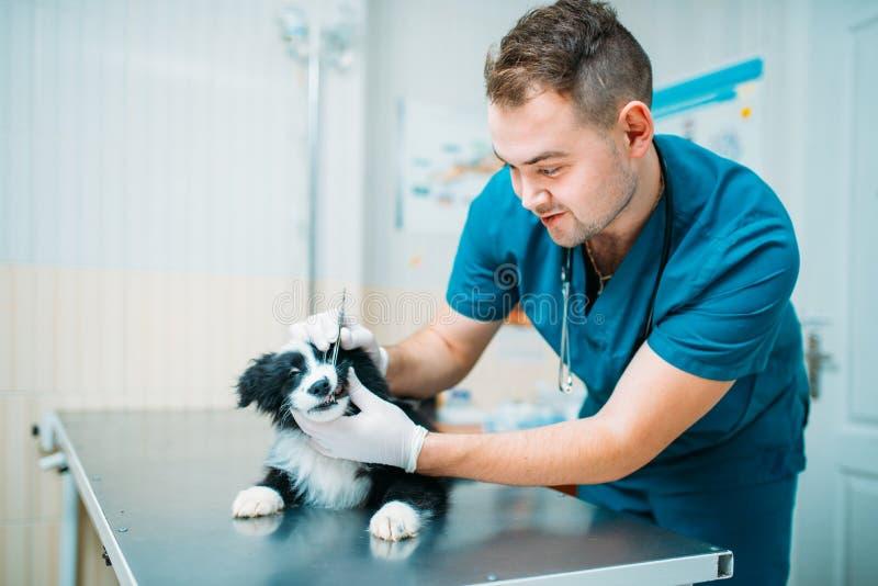 Perro de examen del especialista de sexo masculino, clínica veterinaria imagenes de archivo