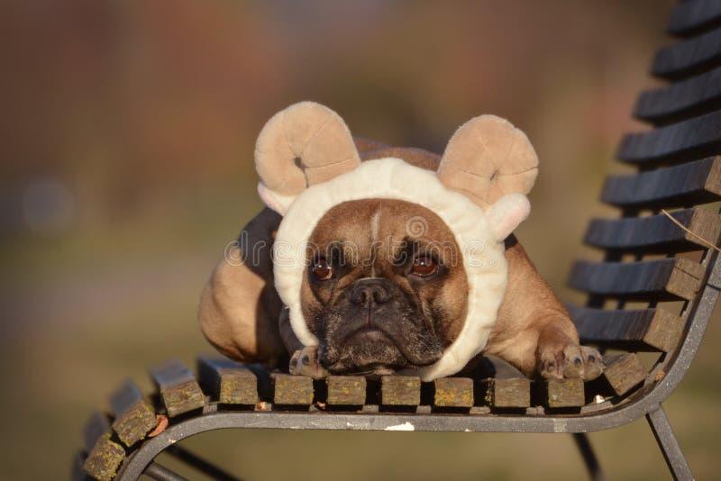 Perro de Fawn French Bulldog con el traje de la venda de los oídos y de los cuernos de las ovejas que miente en un banco imagenes de archivo