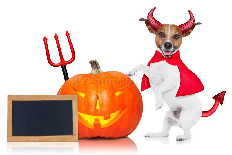 Perro de Halloween imagen de archivo libre de regalías