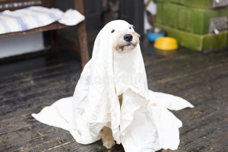 Perro de Halloween fotos de archivo