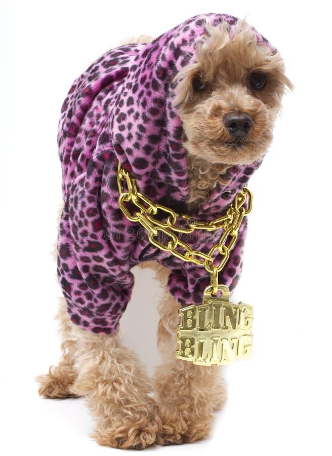 Perro de Hip Hop imagen de archivo libre de regalías