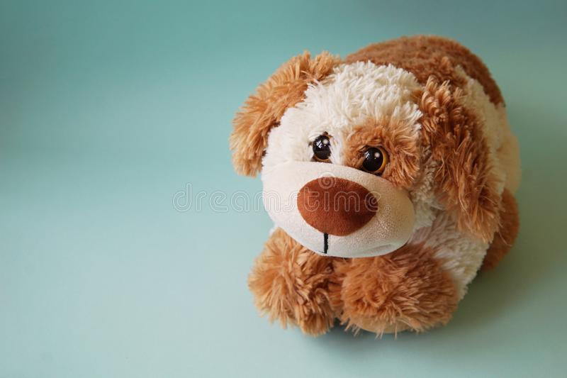 Perro de juguete marrón grande fotos de archivo libres de regalías
