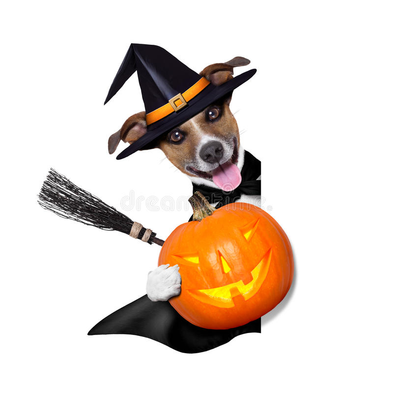 Perro de la bruja de Halloween fotografía de archivo libre de regalías