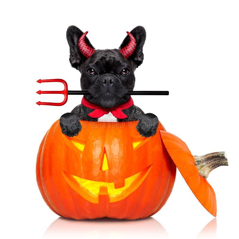 Perro de la bruja de la calabaza de Halloween imagen de archivo libre de regalías
