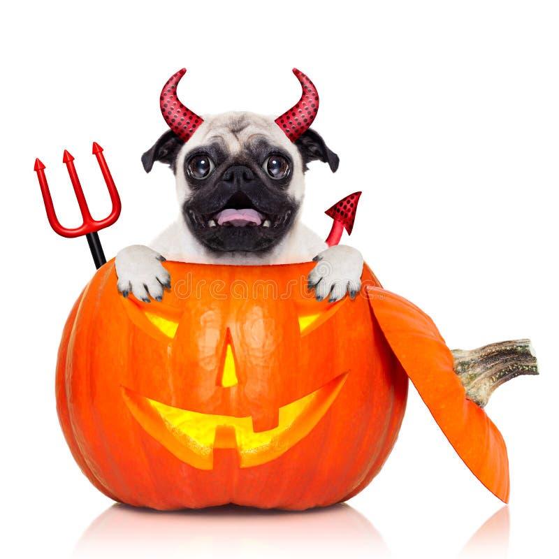 Perro de la bruja de la calabaza de Halloween imágenes de archivo libres de regalías