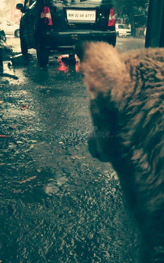 Perro de la calle imagen de archivo libre de regalías
