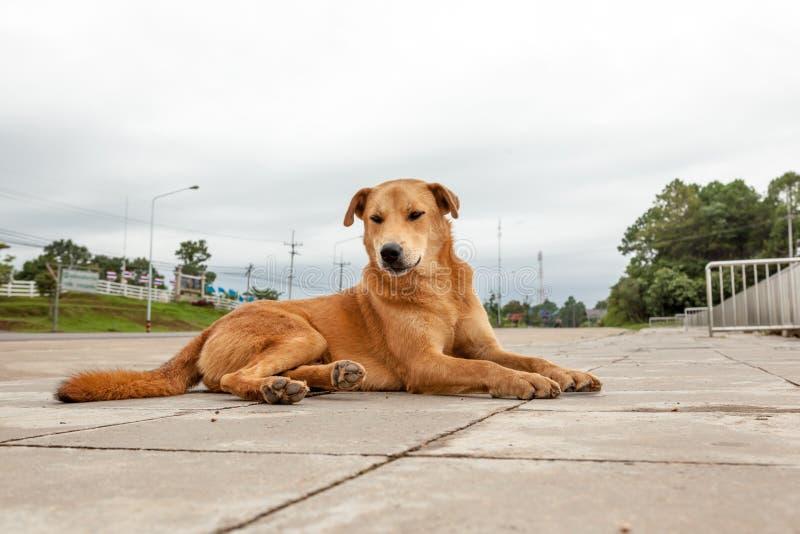 Perro de la calle imagen de archivo