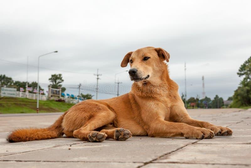 Perro de la calle fotografía de archivo libre de regalías