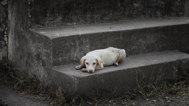 Perro de la calle en las escaleras fotos de archivo