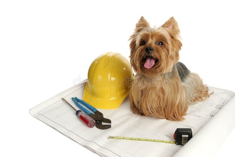 Perro de la construcción fotografía de archivo