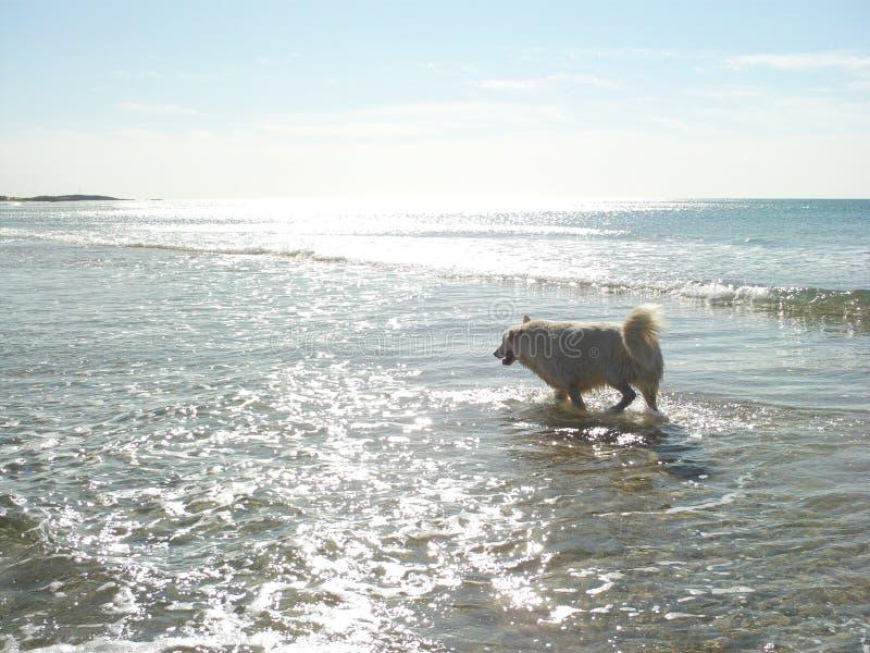 Perro de la costa fotos de archivo libres de regalías