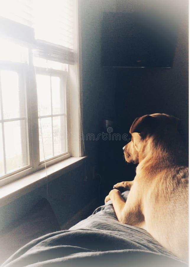 Perro de la familia que espera en su familia fotos de archivo
