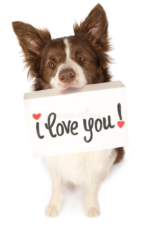 Perro de la frontera del collie con la tarjeta imagenes de archivo