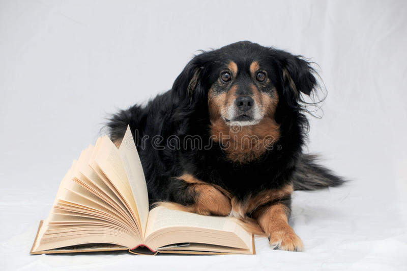 Perro de la lectura fotos de archivo libres de regalías