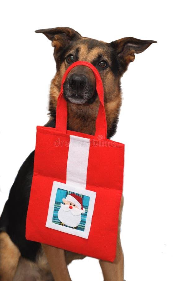 Perro de la Navidad imágenes de archivo libres de regalías