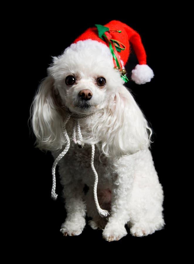 Perro de la Navidad fotografía de archivo libre de regalías