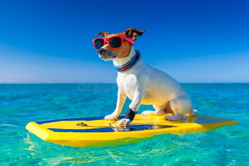 Perro de la persona que practica surf imagen de archivo libre de regalías
