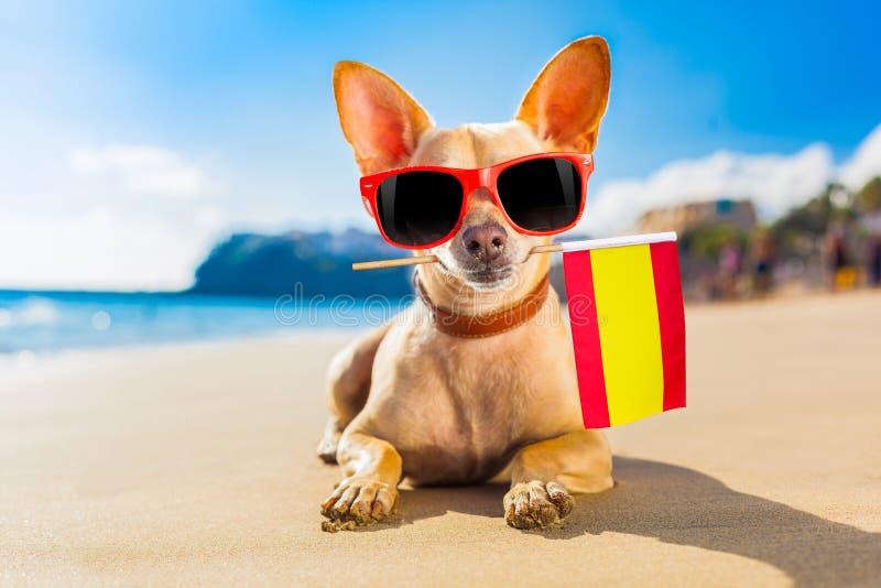 Perro de la persona que practica surf en la playa fotos de archivo