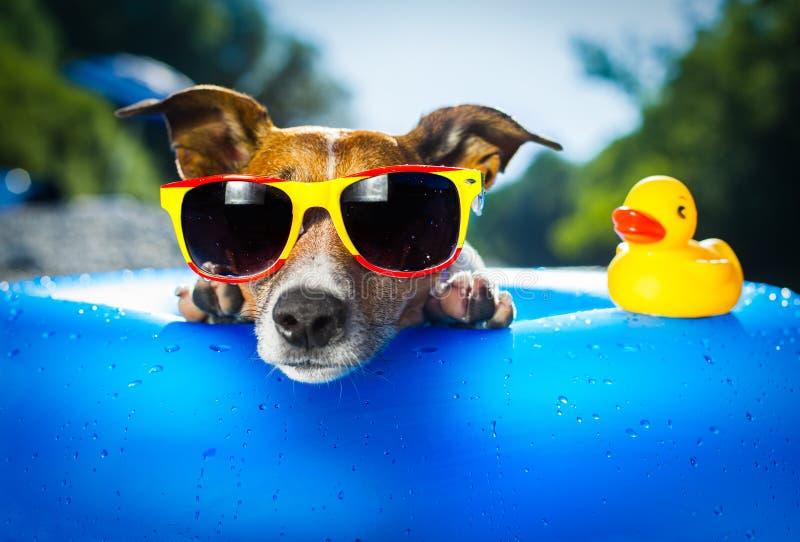 Perro de la playa foto de archivo libre de regalías