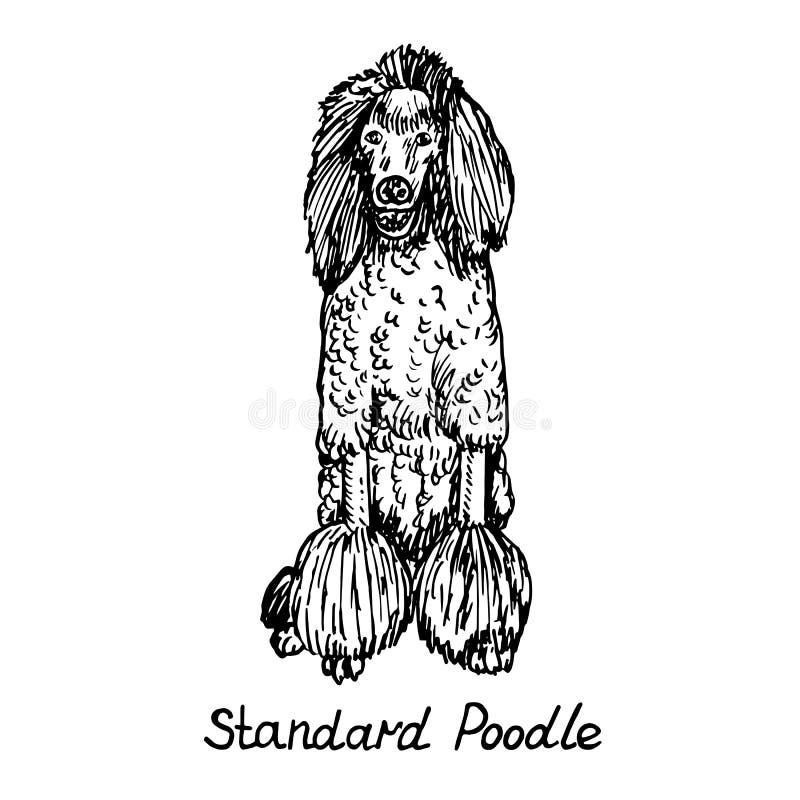 Perro de la raza que se sienta, bosquejo exhausto del caniche estándar del garabato de la mano con la inscripción, ejemplo aislad stock de ilustración