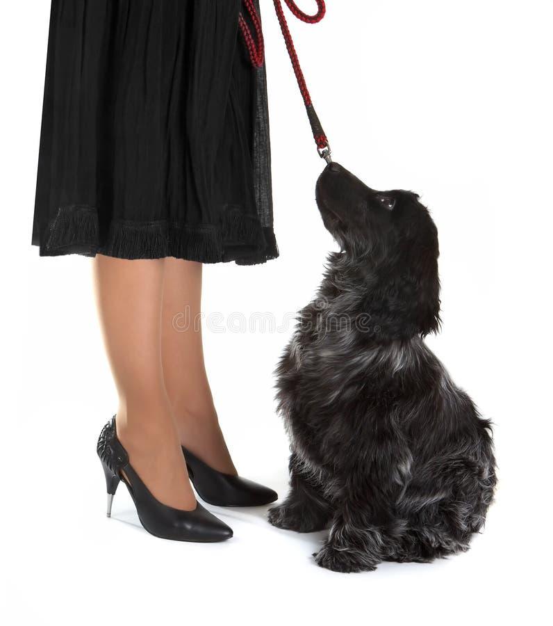 Perro de la señora imagen de archivo libre de regalías