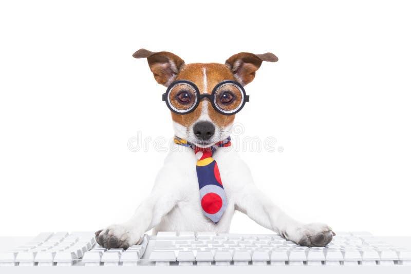 Perro de la secretaria imagen de archivo libre de regalías