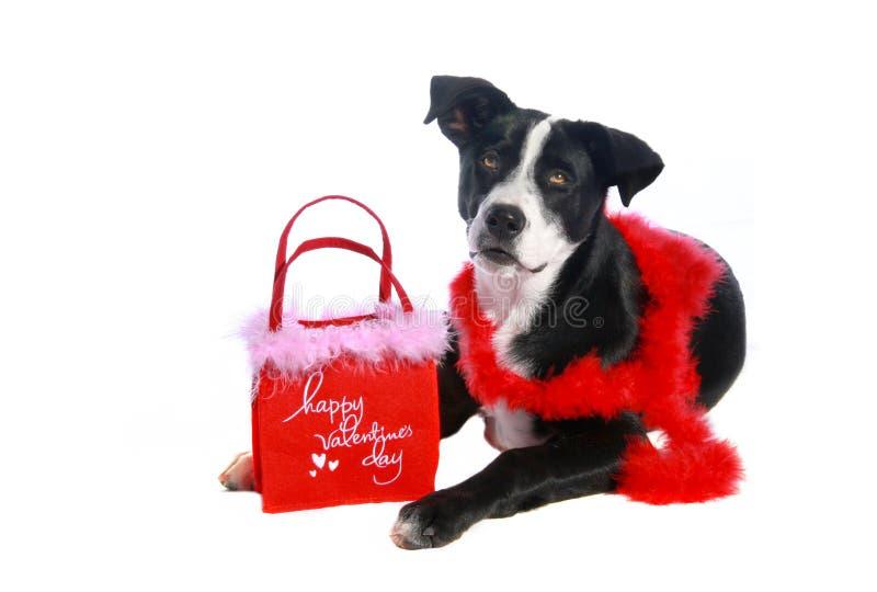 Perro de la tarjeta del día de San Valentín fotografía de archivo