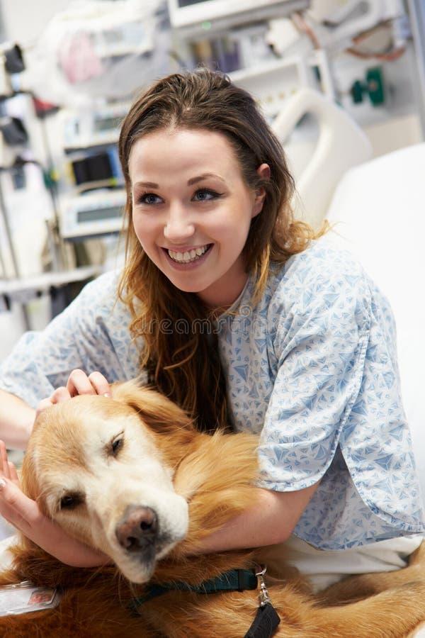 Perro de la terapia que visita al paciente femenino joven en hospital fotografía de archivo