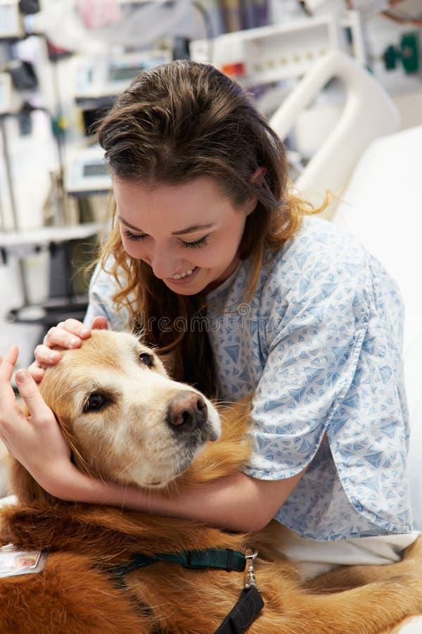 Perro de la terapia que visita al paciente femenino joven en hospital imagen de archivo libre de regalías