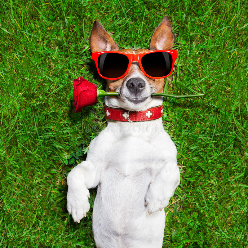 Download Perro De Las Tarjetas Del Día De San Valentín Imagen de archivo - Imagen de perro, fresco: 41909605