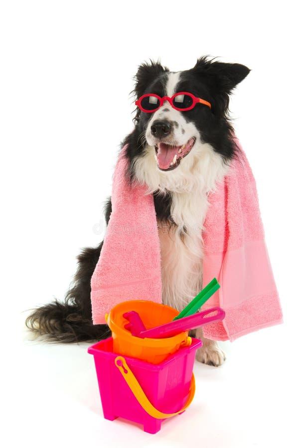 Perro de las vacaciones imagen de archivo libre de regalías