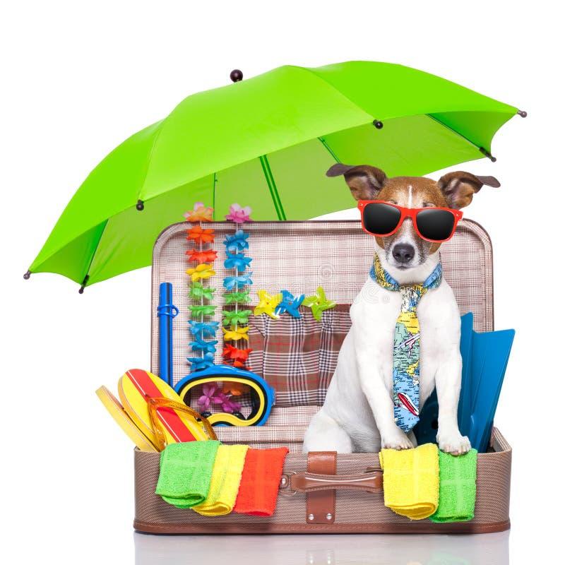 Perro de las vacaciones de verano fotografía de archivo