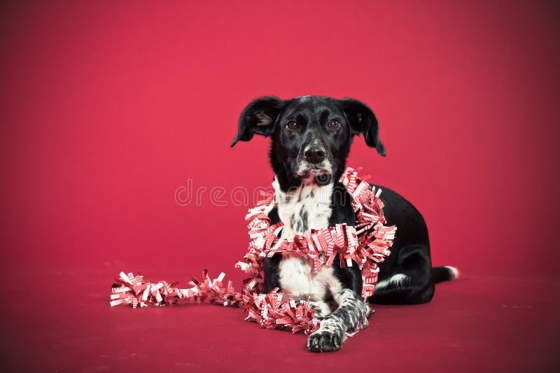 Perro de mentira con el adorno fotos de archivo libres de regalías