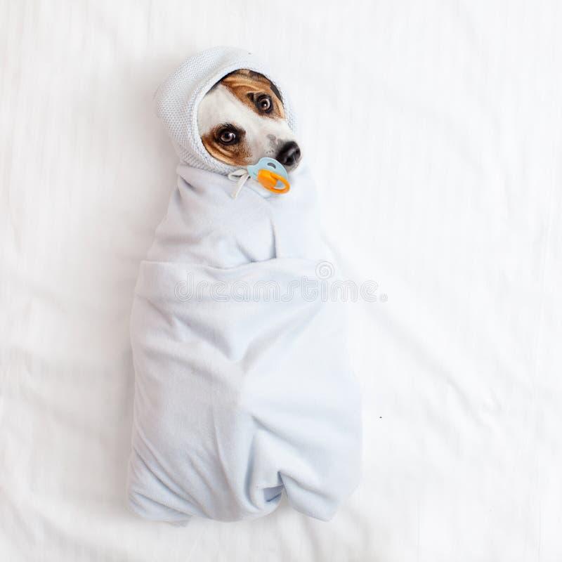 Perro de mentira con el soother imagen de archivo libre de regalías