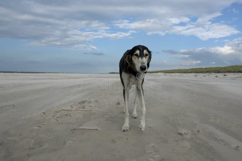 Perro de ningún donde foto de archivo