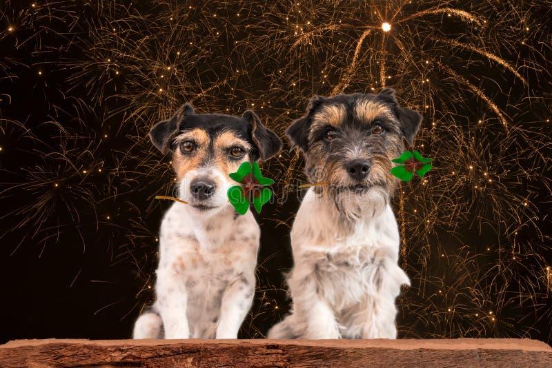 Perro de Nochevieja - barcos de la fortuna - Jack Russell Terrier fotos de archivo