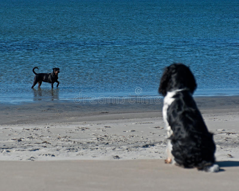 Perro de observación del bañista del perro fotos de archivo libres de regalías