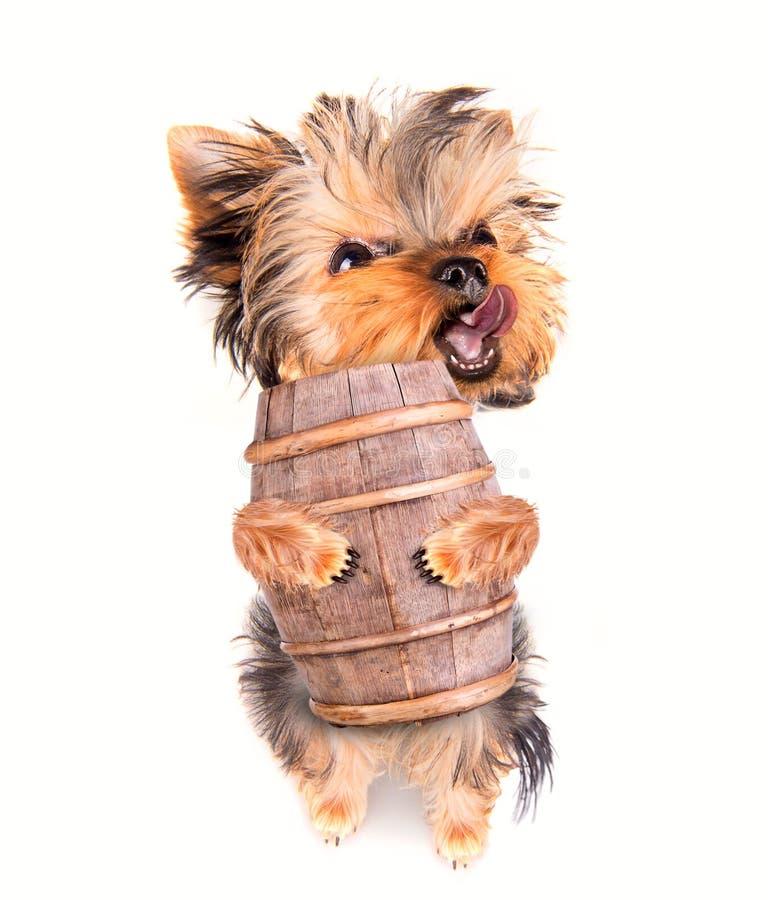 Perro de Oktoberfest con el barril de cerveza fotografía de archivo