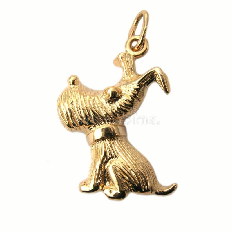 Perro de oro de la joyería fotografía de archivo