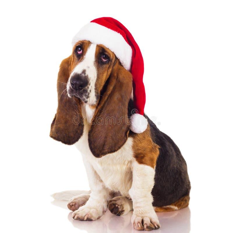 Perro de Papá Noel imagenes de archivo