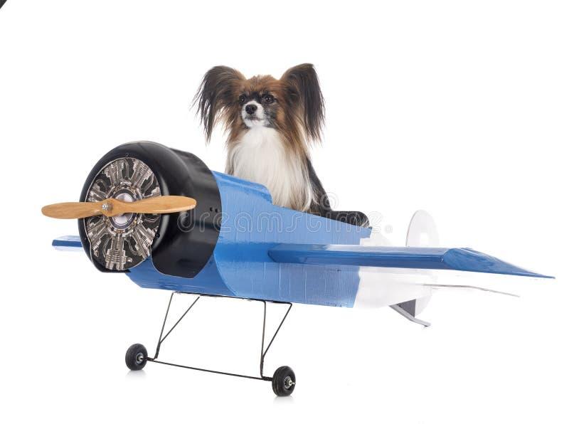 Perro de papilón y avión foto de archivo libre de regalías