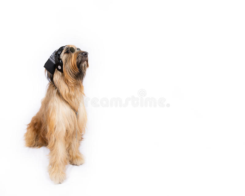 Perro de pastor francés grande en la imagen de DJ escarpado fotografía de archivo