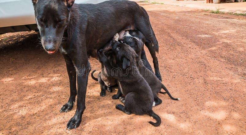 Perro de perrito foto de archivo libre de regalías