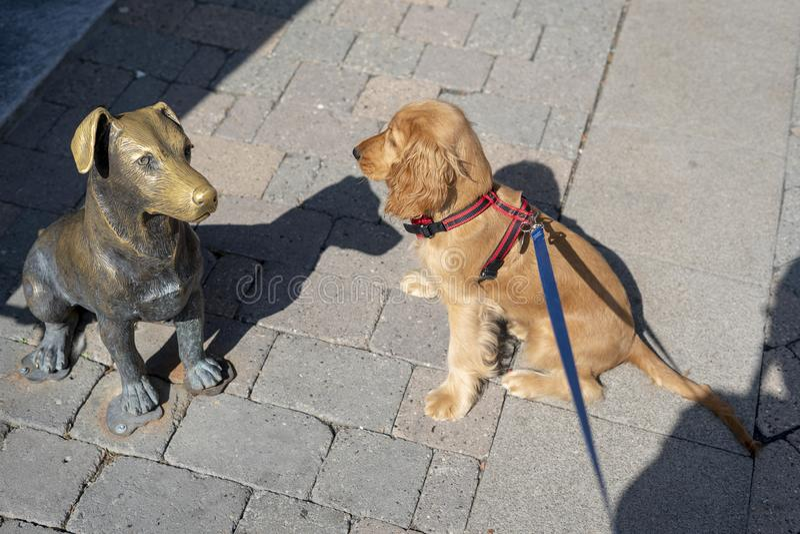 Perro de perrito cocker spaniel plooking una estatua del perro foto de archivo libre de regalías