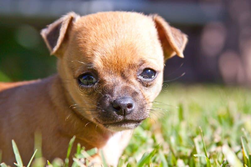 Perro de perrito curioso foto de archivo