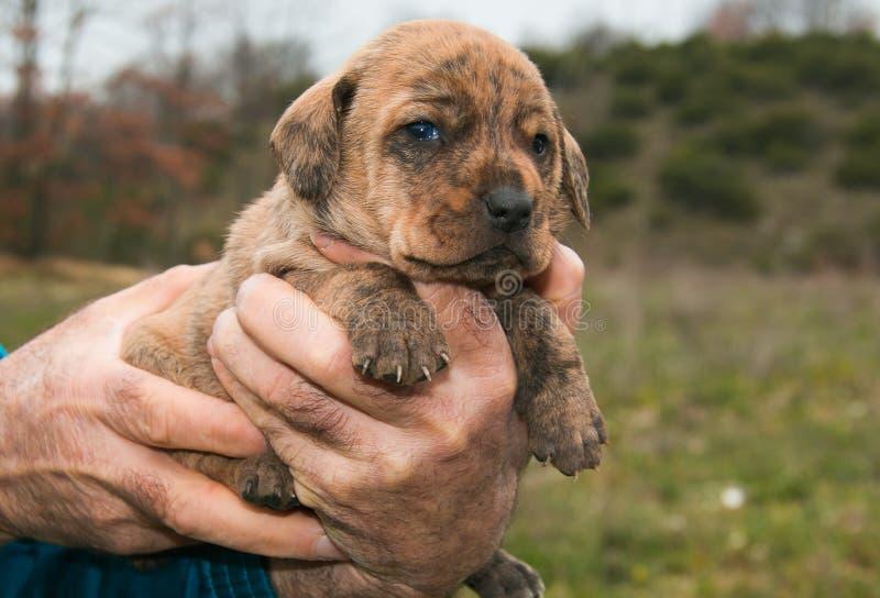 Perro de perrito del bebé fotos de archivo libres de regalías