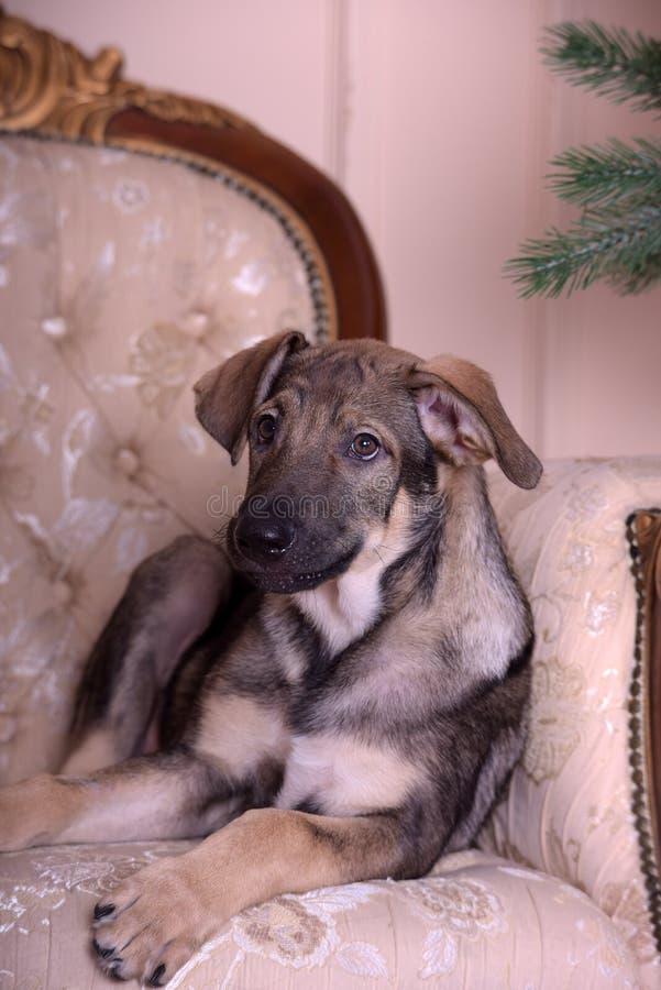 Perro de perrito en el sofá imagen de archivo