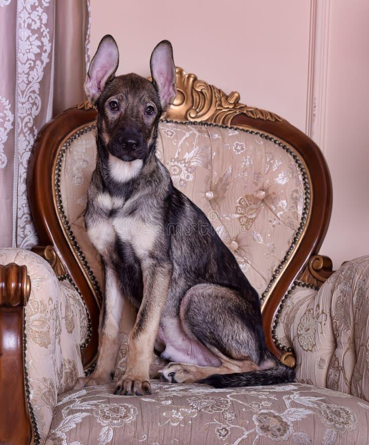 Perro de perrito en el sofá imagen de archivo libre de regalías