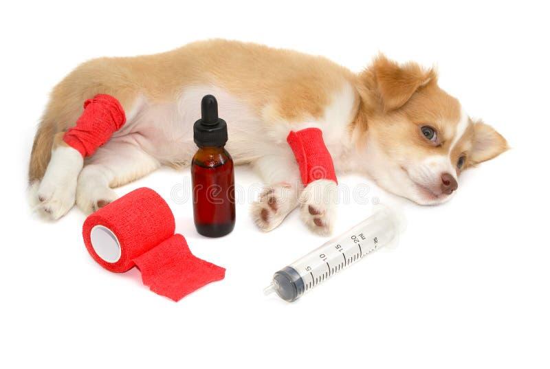 Perro de perrito de examen del doctor en clínica del veterinario imágenes de archivo libres de regalías